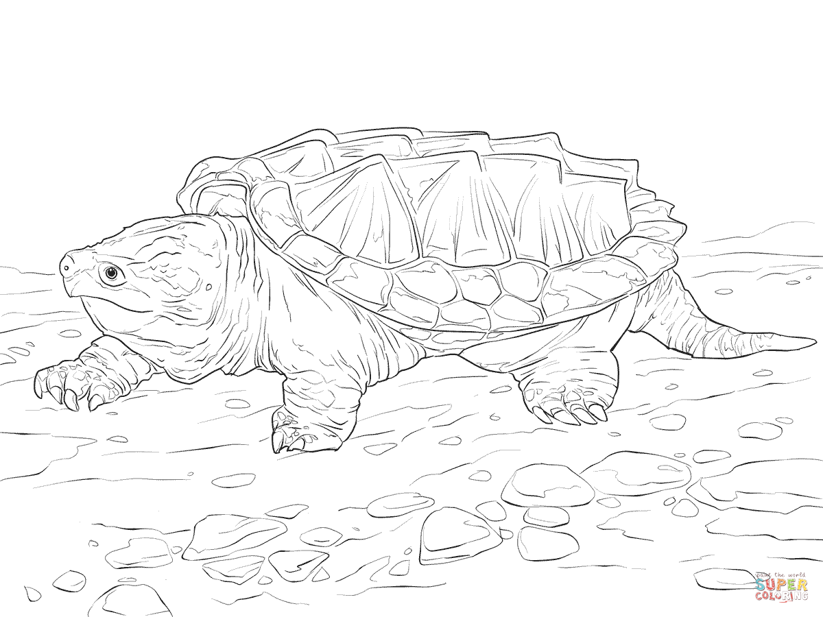 1200x900 Walking Alligator Snapping Turtle Coloring Page Free Printable
