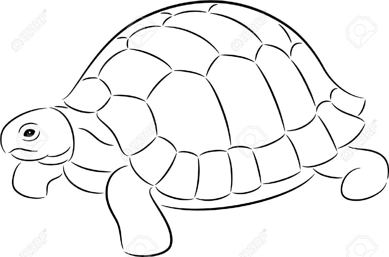 1300x860 Drawn Line Art Tortoise Shell