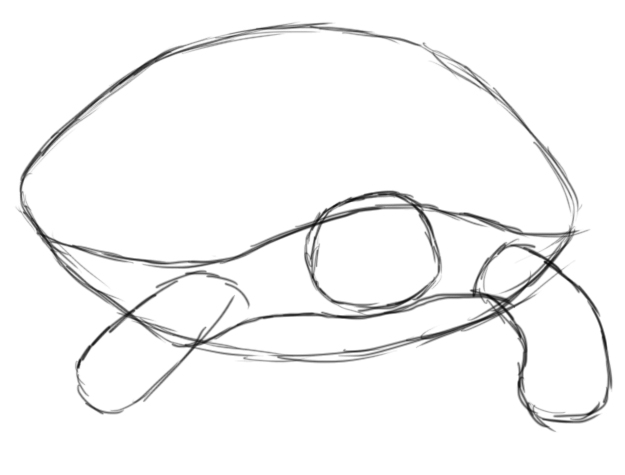 625x475 How To Draw A Turtle Sketchy Turtles, Draw And To Draw