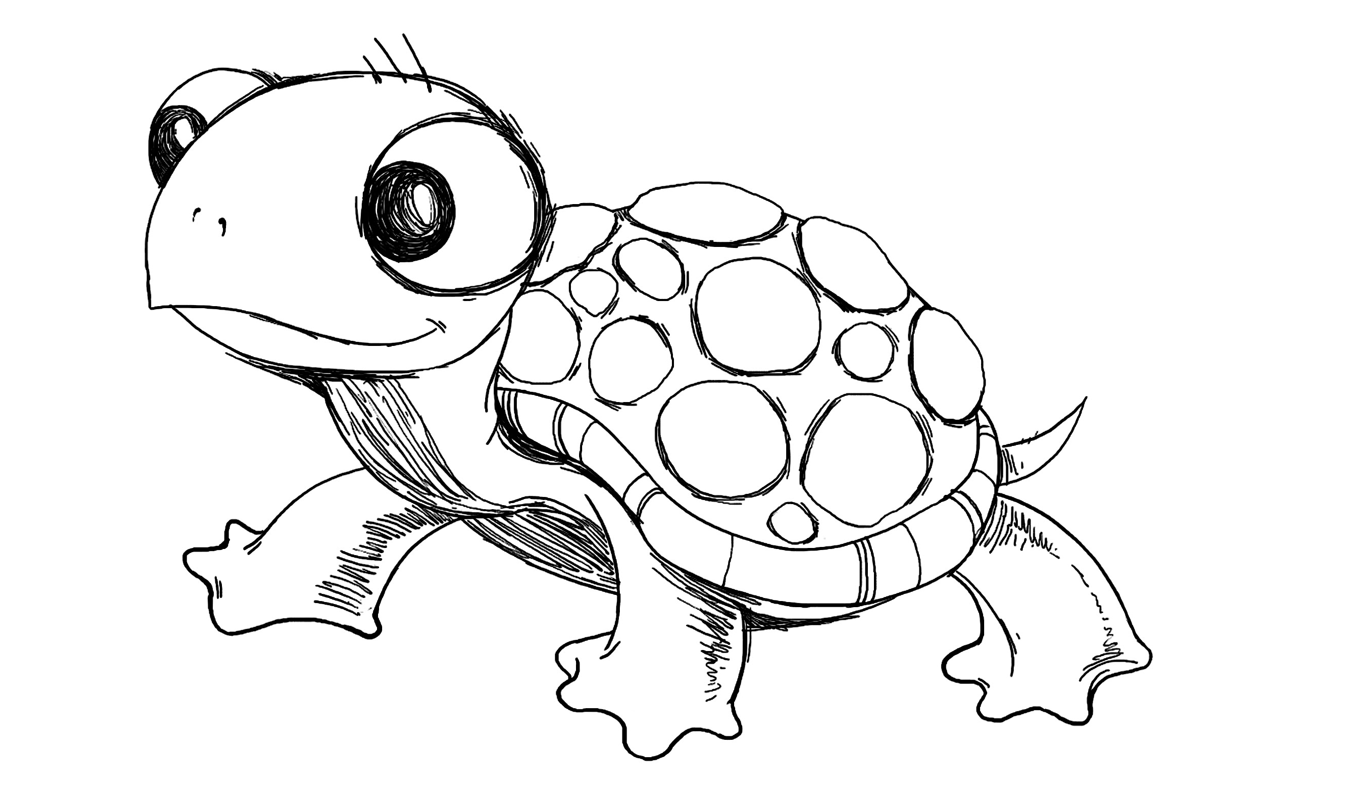 It is a picture of Stupendous Turtle Cartoon Drawing