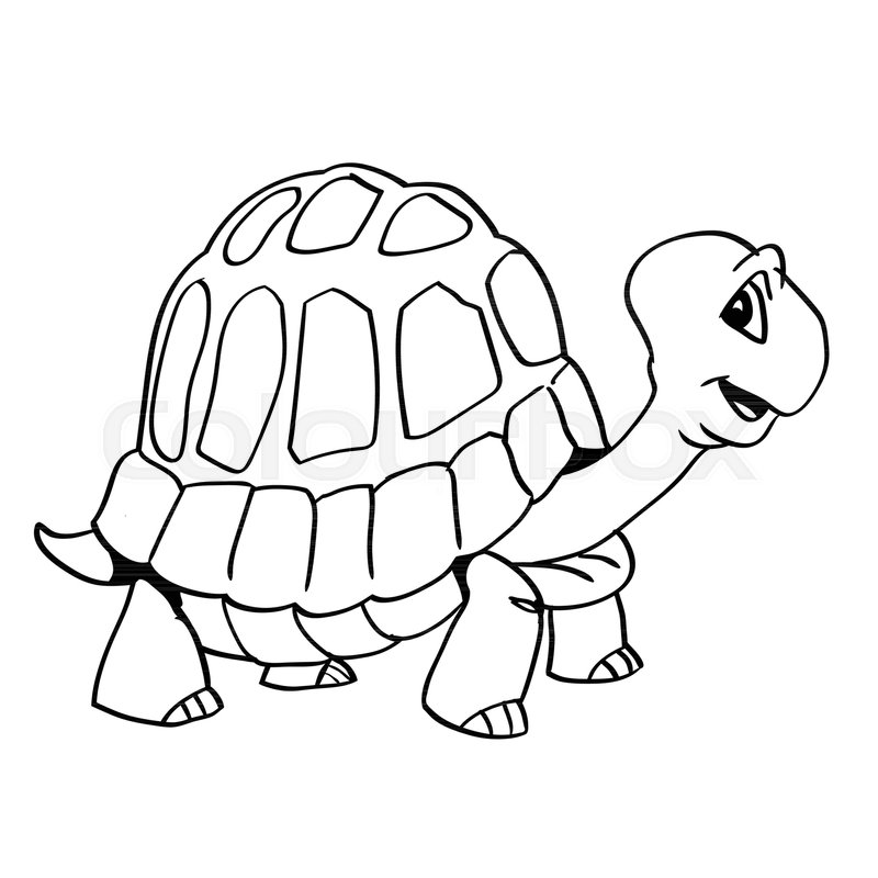 800x800 Hand Drawing Of A Smiley Turtle Cartoon Isolated On White