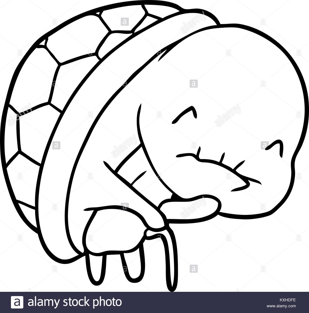 1300x1314 Turtle Drawing Stock Photos Amp Turtle Drawing Stock Images