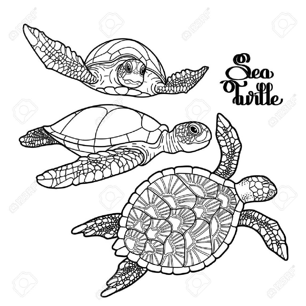 1300x1300 Graphic Hawksbill Sea Turtle Collection Drawn In Line Art Style
