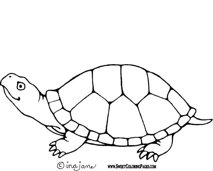 photo relating to Sea Turtle Template Printable identify Turtle Determine Drawing at  Cost-free for