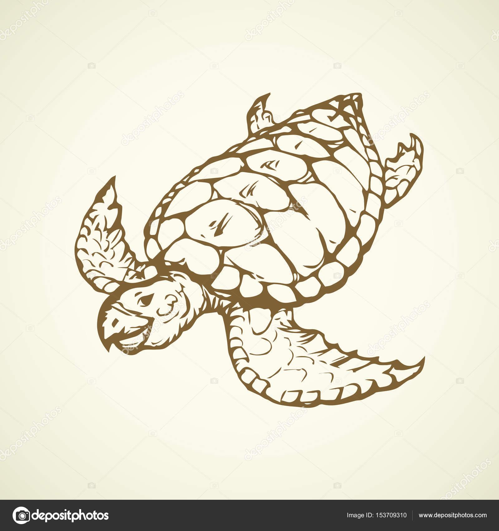 1600x1700 Turtle. Vector Drawing Stock Vector Marinka
