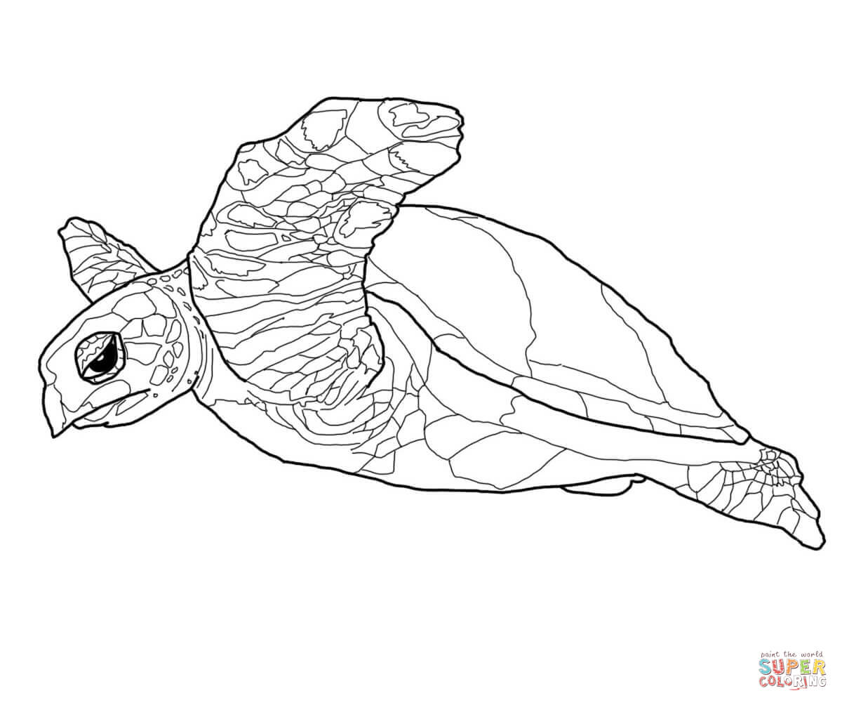 1200x1004 Hawksbill Sea Turtle Coloring Page Free Printable Pages