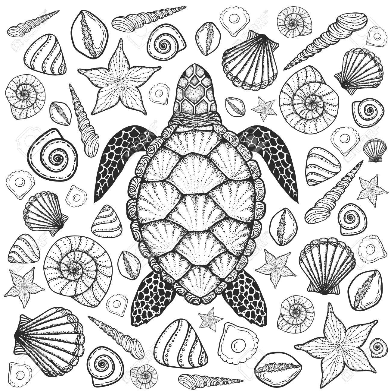 1299x1300 Sea Turtle And Shells In Line Art Style. Hand Drawn Vector