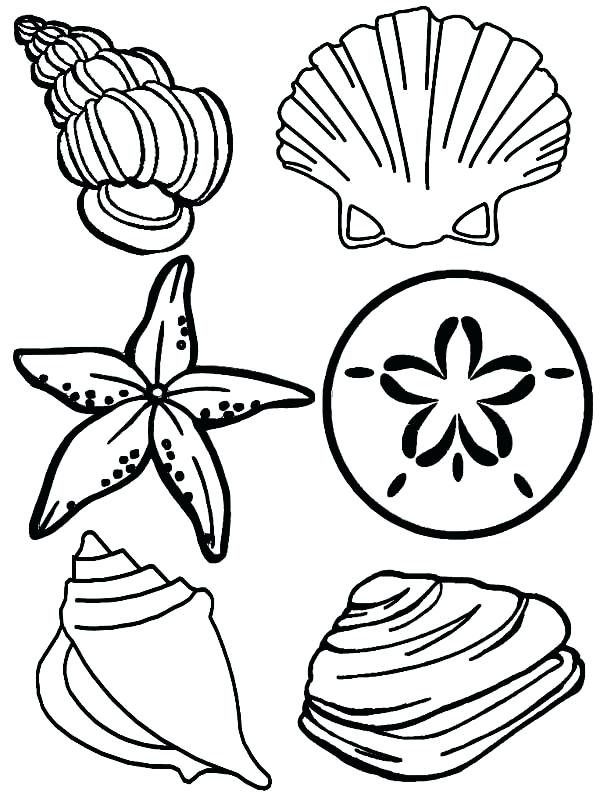 600x800 Shell Coloring Pages Shell Coloring Pages Ninja Turtle Shell
