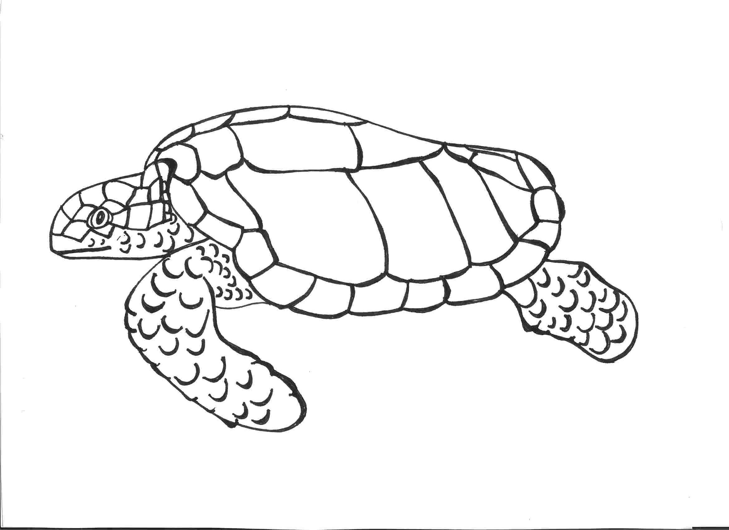 2338x1700 Turtle Shell Coloring Pages Best Of Innovative Sea Turtle To Color
