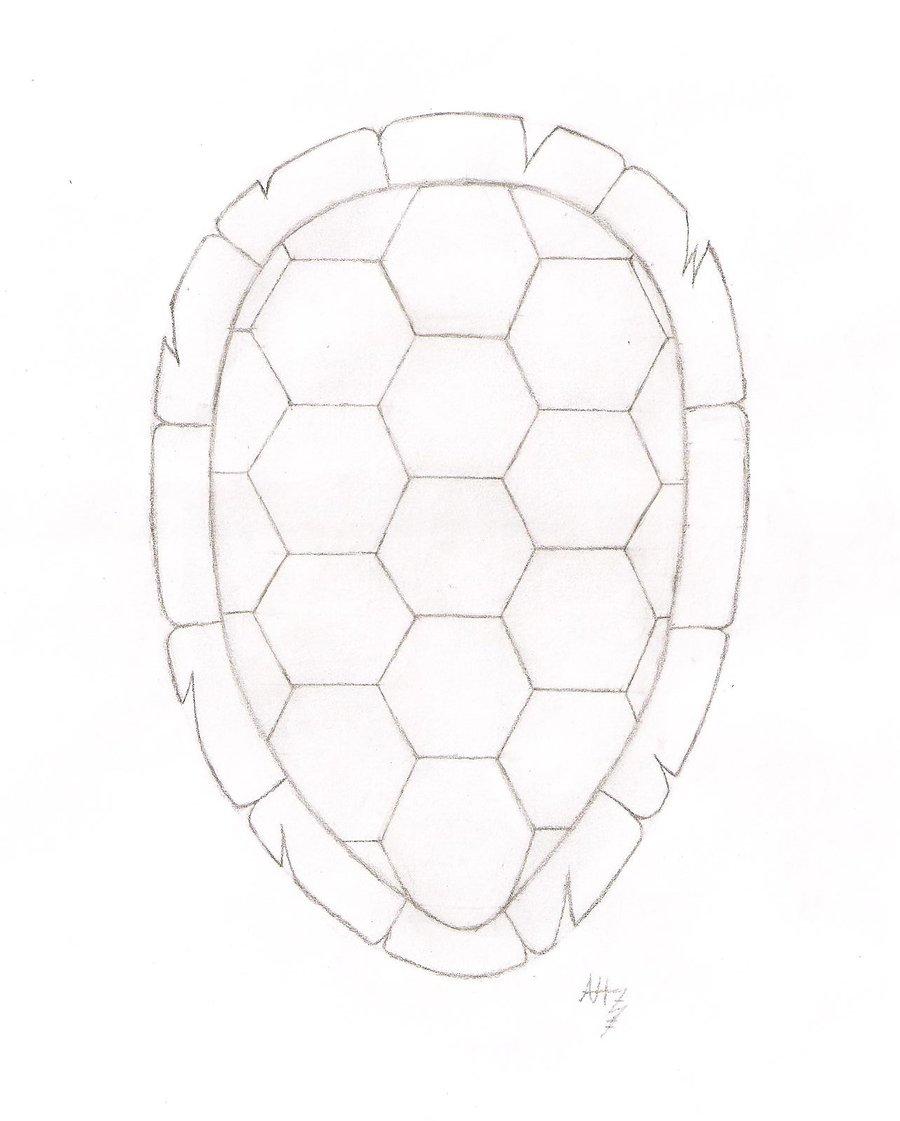 900x1121 Turtle Shell By Azoresangel