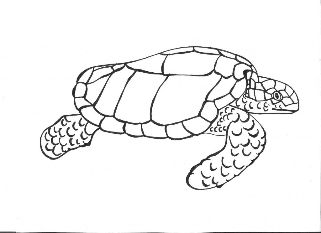 Turtles Step By Step Drawing