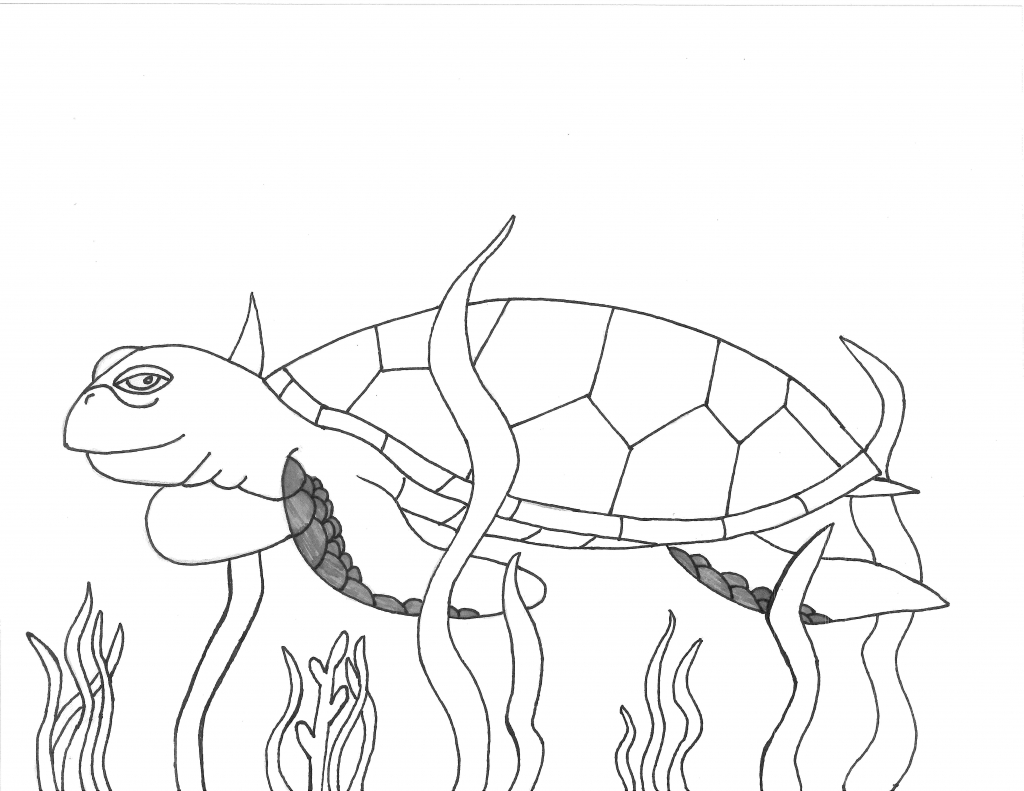 1024x791 Drawing A Sea Turtle How To Draw A Sea Turtle Cartoon Sea Turtle