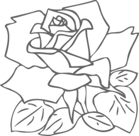 480x467 How To Draw A Rose