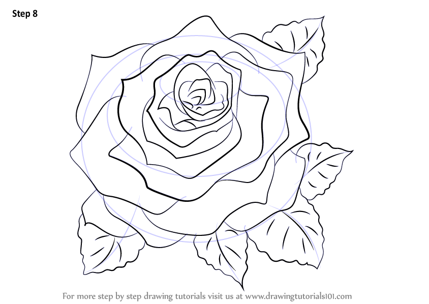 844x598 Learn How To Draw A Rose (Rose) Step By Step Drawing Tutorials