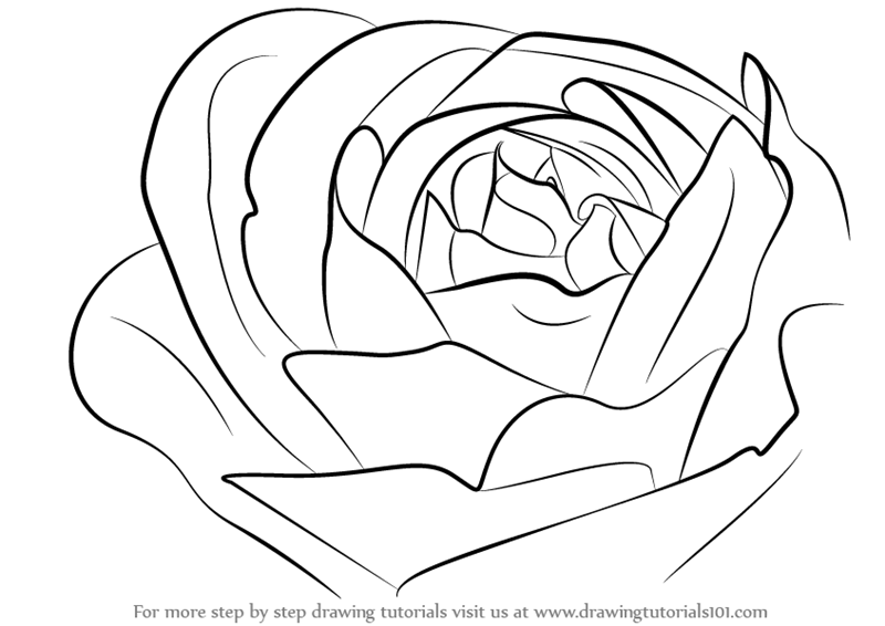 800x566 Learn How To Draw A Rose Bud (Rose) Step By Step Drawing Tutorials