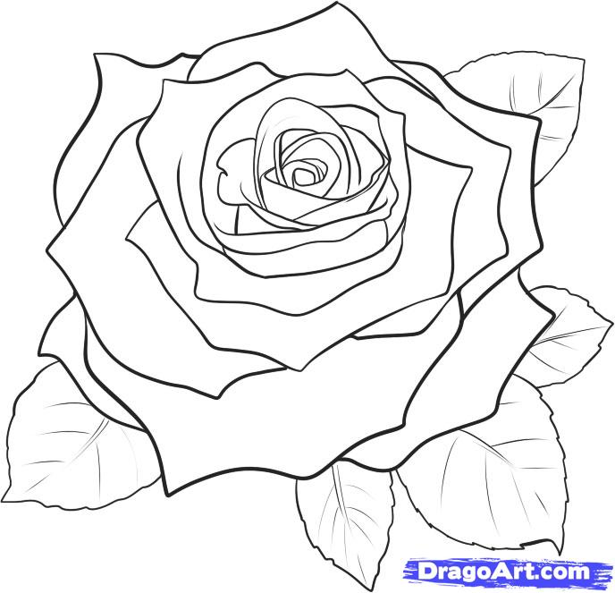 688x663 How To Draw A Rose How To Draw A Realistic Rose, Draw Real Rose