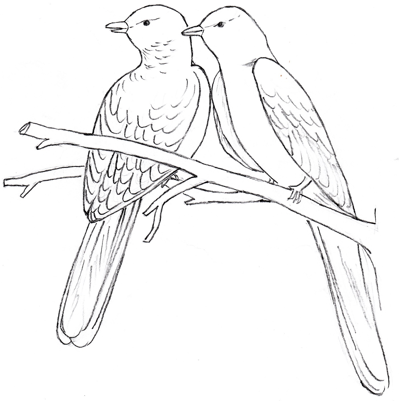 dove drawing outline at getdrawings com