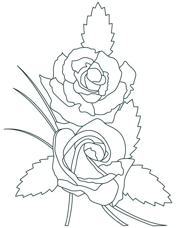 600x776 Two Beautiful Rose Coloring Page