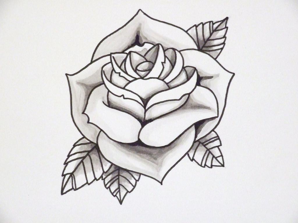 1024x768 Knumathise Realistic Rose Drawing Outline Images