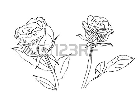 450x321 Hand Sketch Of Two Roses Royalty Free Cliparts, Vectors, And Stock