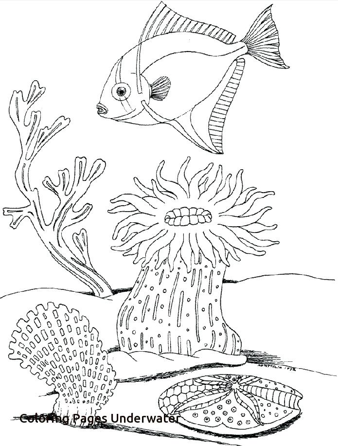 695x917 Underwater Coloring Pages Full Size Of Drawing Ocean