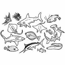 Underwater Animals Drawing