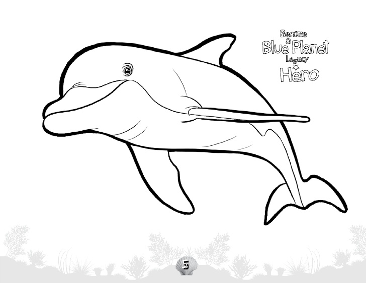 728x563 Underwater Odyssey