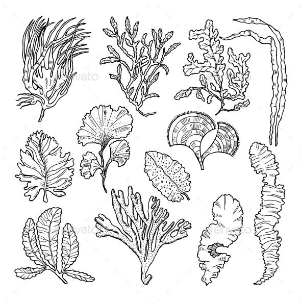 590x590 Marine Sketch With Different Underwater Plants Underwater