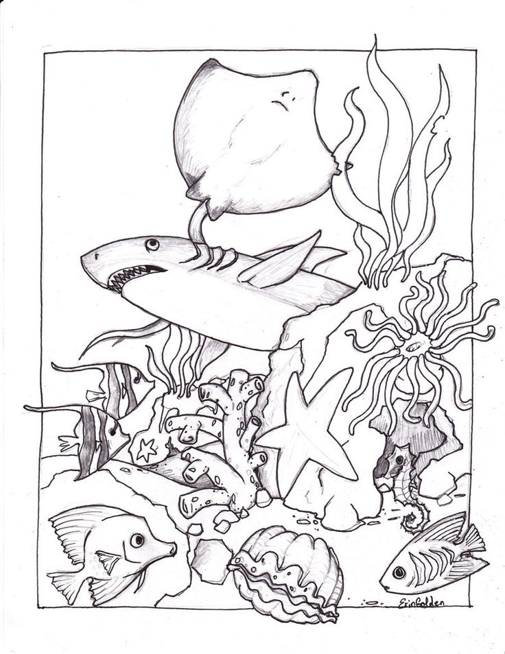 736x954 Best Underwater Coloring Pages 86 For Print With