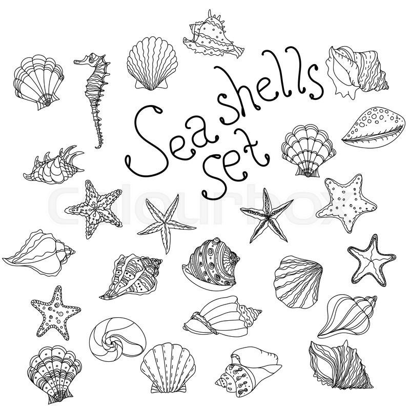800x800 Sea Shell, Starfish, Seashell, Nautilus Sea Fauna Ocean Aquatic