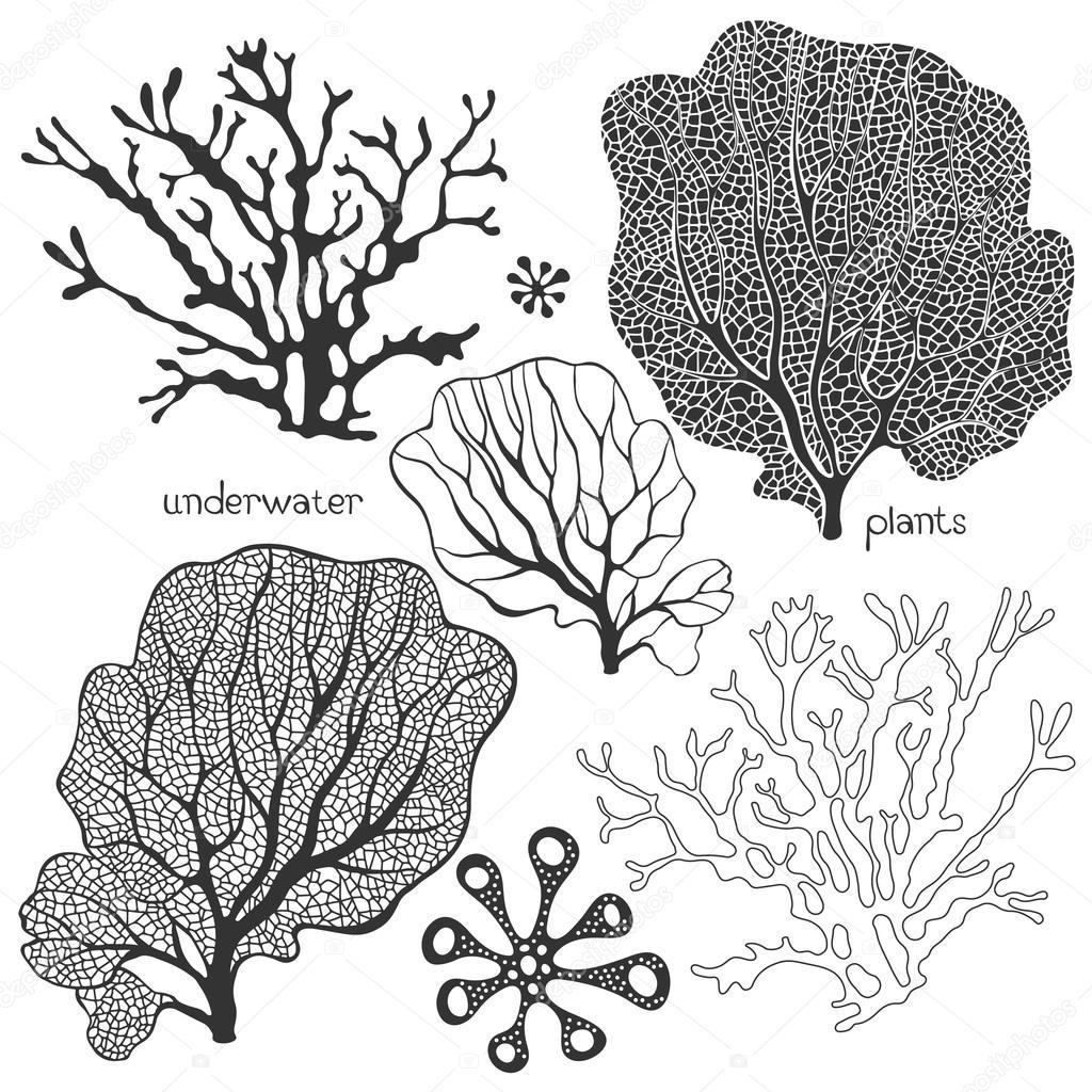 1024x1024 Set Of Underwater Plants. Stock Vector Maritime M