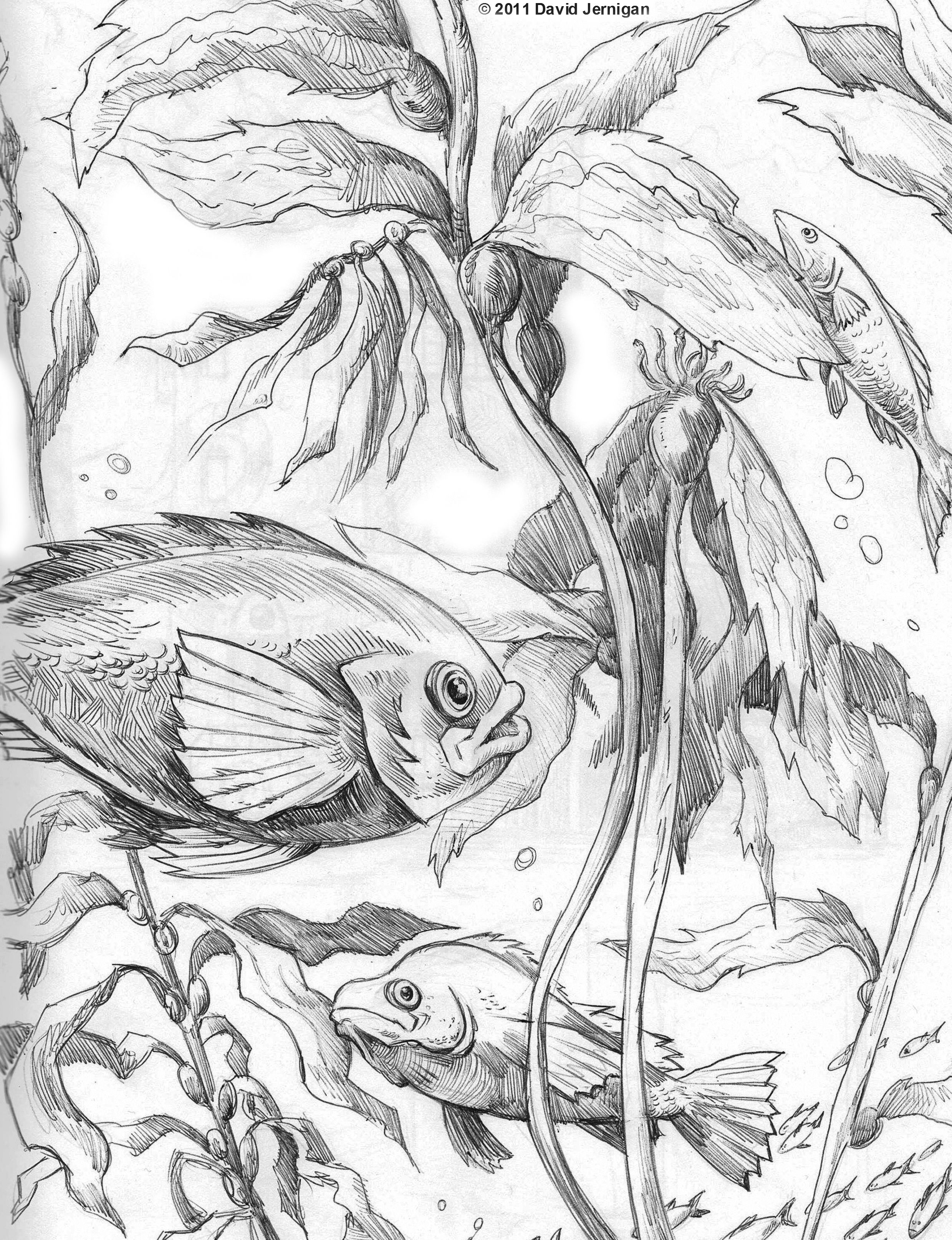 2479x3229 Image Result For Kelp Line Drawings Graphics