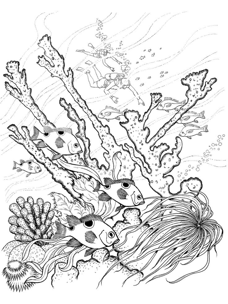 736x980 Realistic Underwater Coloring Pages Color Bros