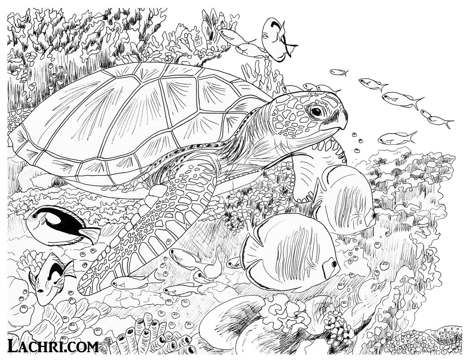 1500x1160 Sea Turtle Colored Pencil Tutorial Turtle, Tutorials And Colored