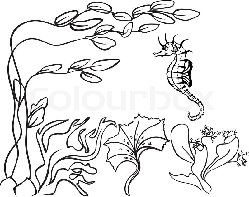 800x631 Sketch, Underwater, Seaweed And Sea Horse Stock Vector Colourbox