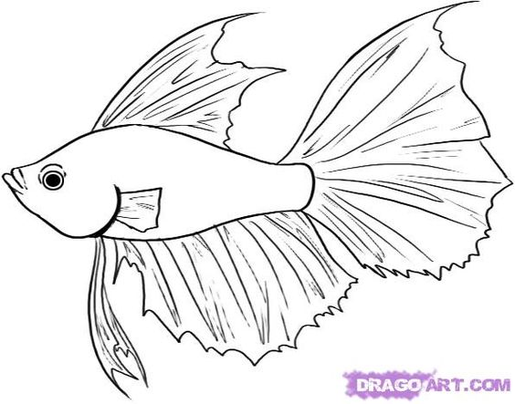 564x443 How To Draw A Betta Fish Step 4 Underwater