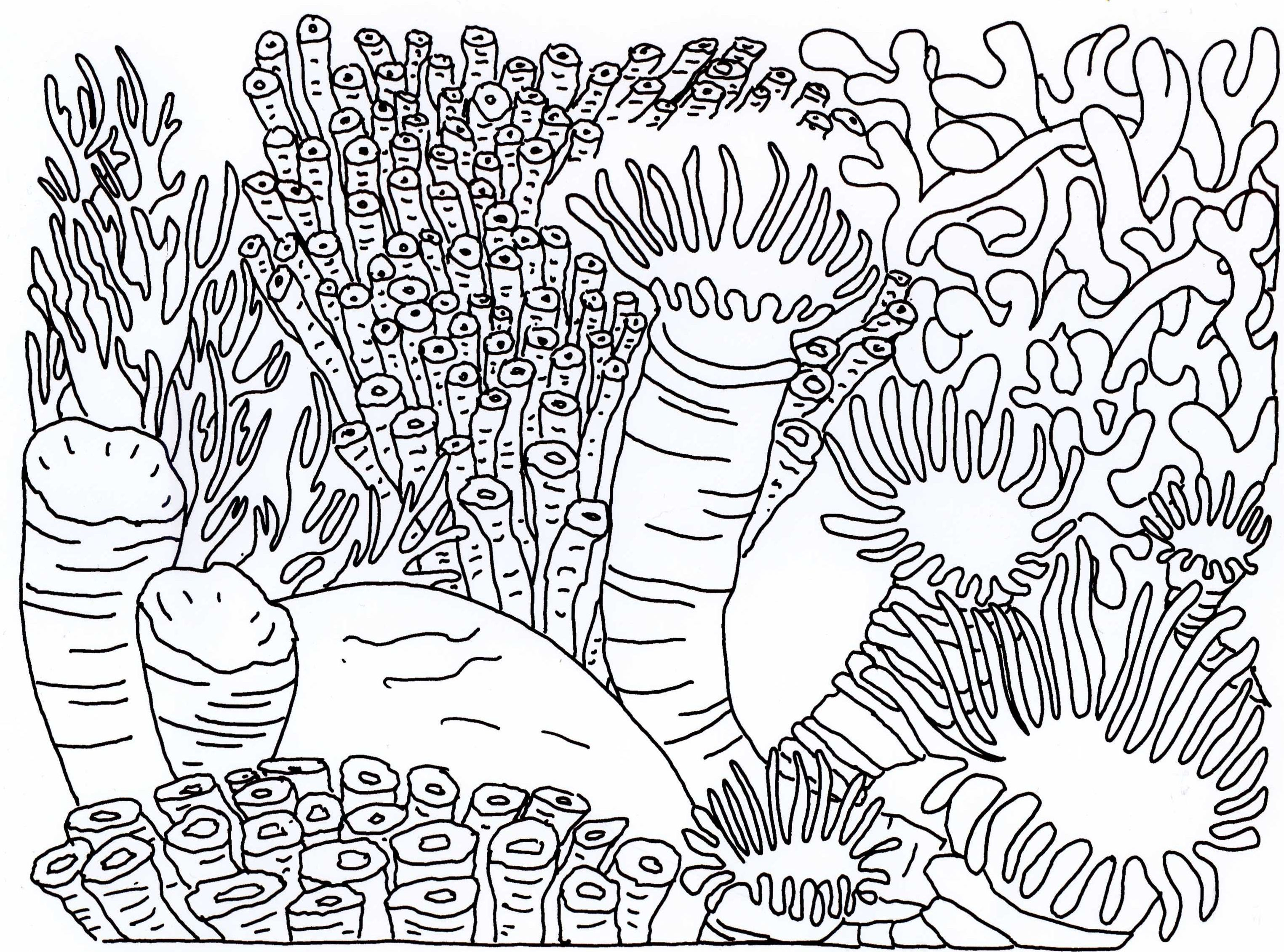 3049x2261 Coral Reef Drawings Superb Drawing Underwater Coral Reef