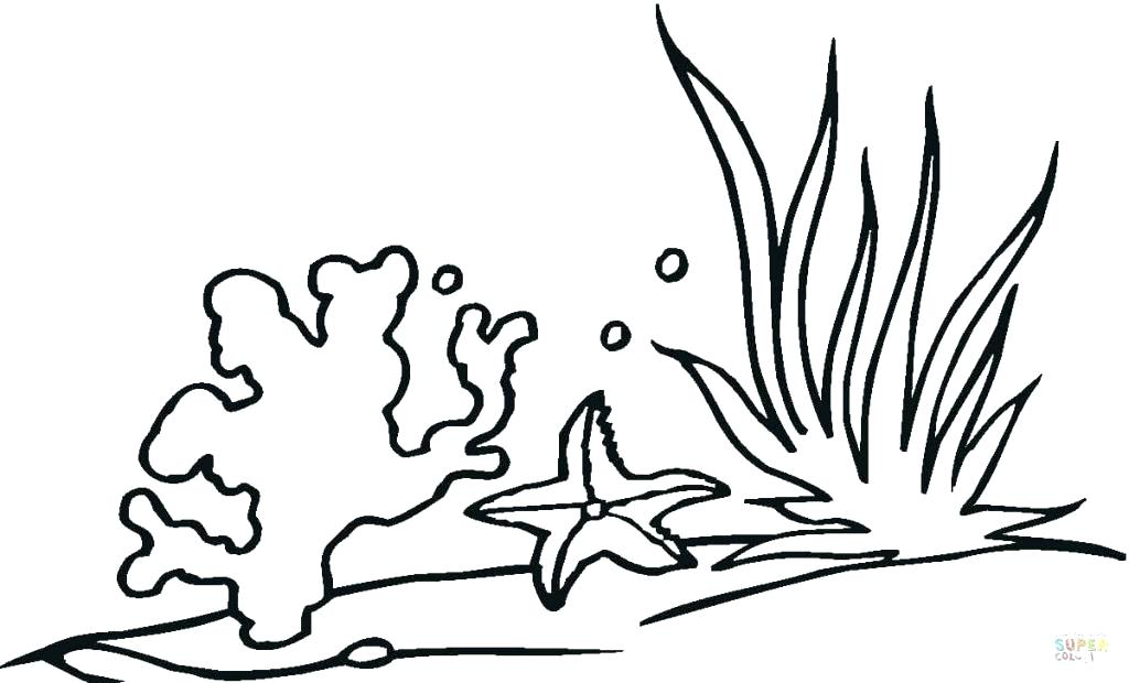 1024x620 Coloring Pages Of Coral Reefs Adult Book Page