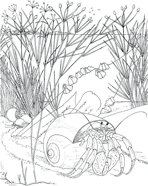573x720 Ocean Scene Coloring Page Like This Item Underwater Ocean Scene