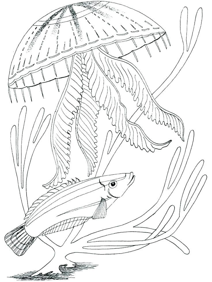736x981 Ocean Scene Coloring Page Printable Ocean Coloring Pages Plus Free