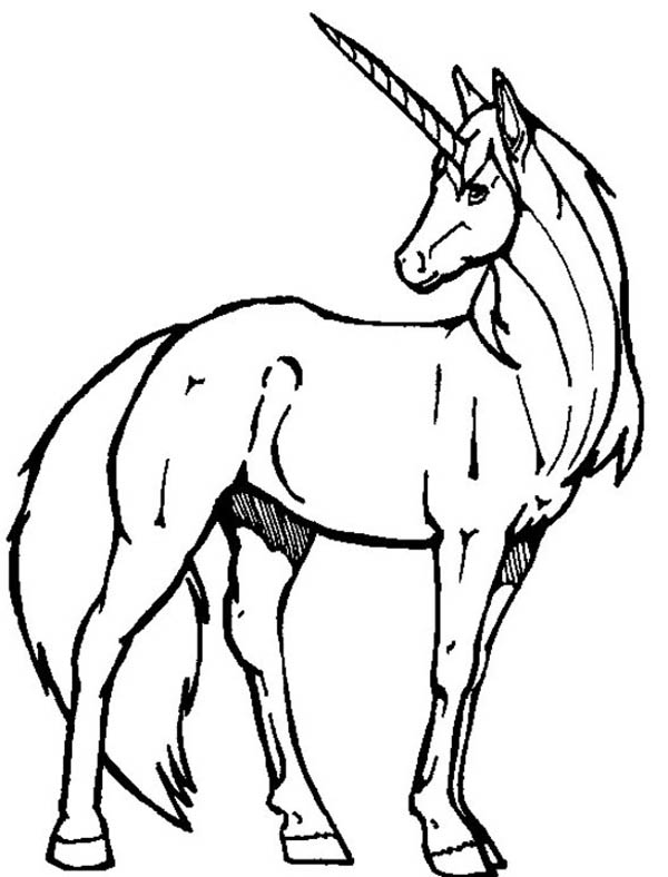 600x788 Unicorn Color Pages A Realistic Drawing Of