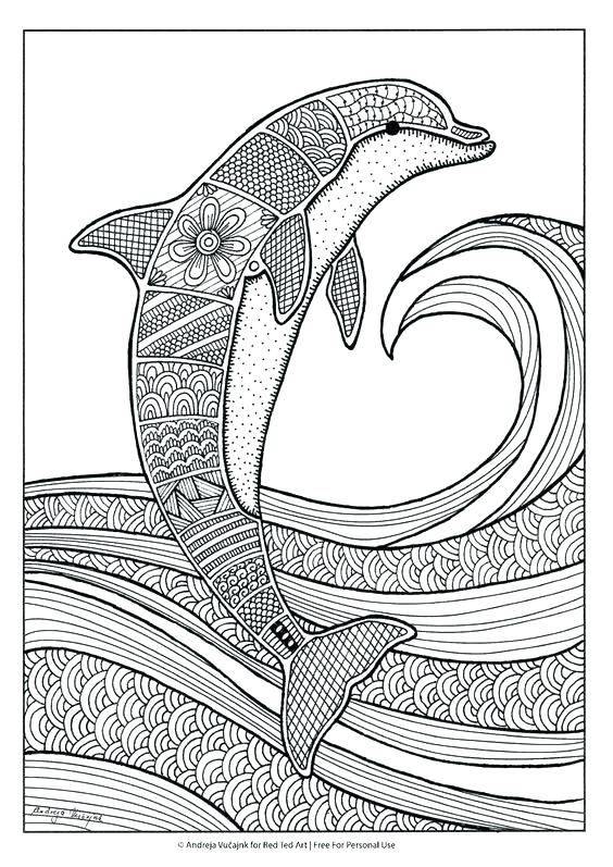 564x797 Best Of Dolphin Coloring Pages Images Dolphin Coloring Pages Free