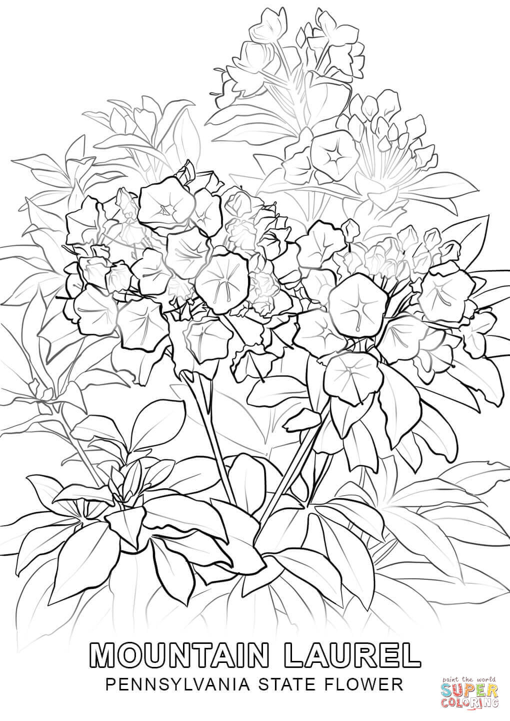 1020x1440 Pennsylvania State Flower Coloring Page Free Printable Coloring