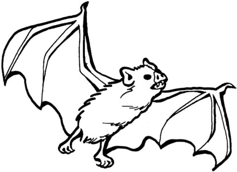 480x349 Vampire Bat Coloring Page Free Printable Pages