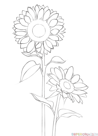 413x575 How To Draw A Sunflower Step By Step. Drawing Tutorials For Kids
