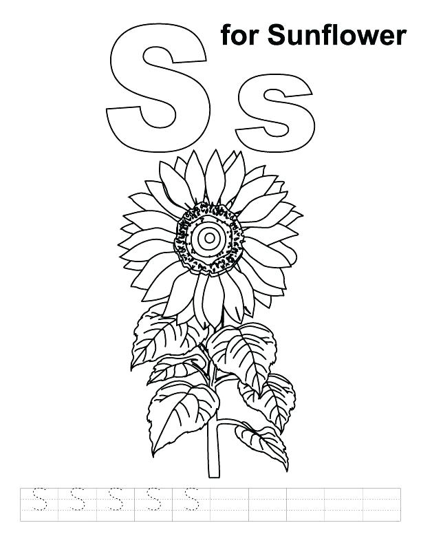 612x792 Perfect Vincent Van Gogh Coloring Pages Fee Sunflower S For Page