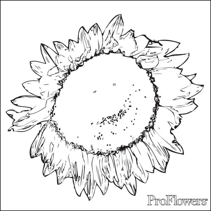 736x736 85 Best Sunflower Coloring Page Van Gogh Images