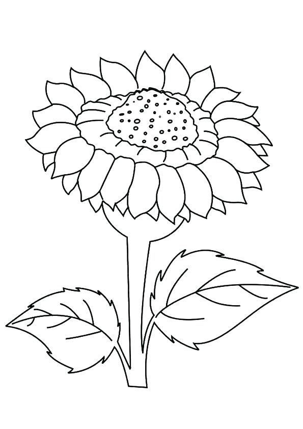595x842 Best Sunflower Coloring Pages Images Printable Pictures