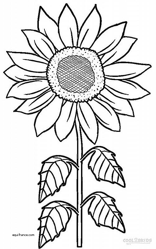 502x800 Vases Design Fresh Vase With 12 Sunflowers By Vincent Van Gogh