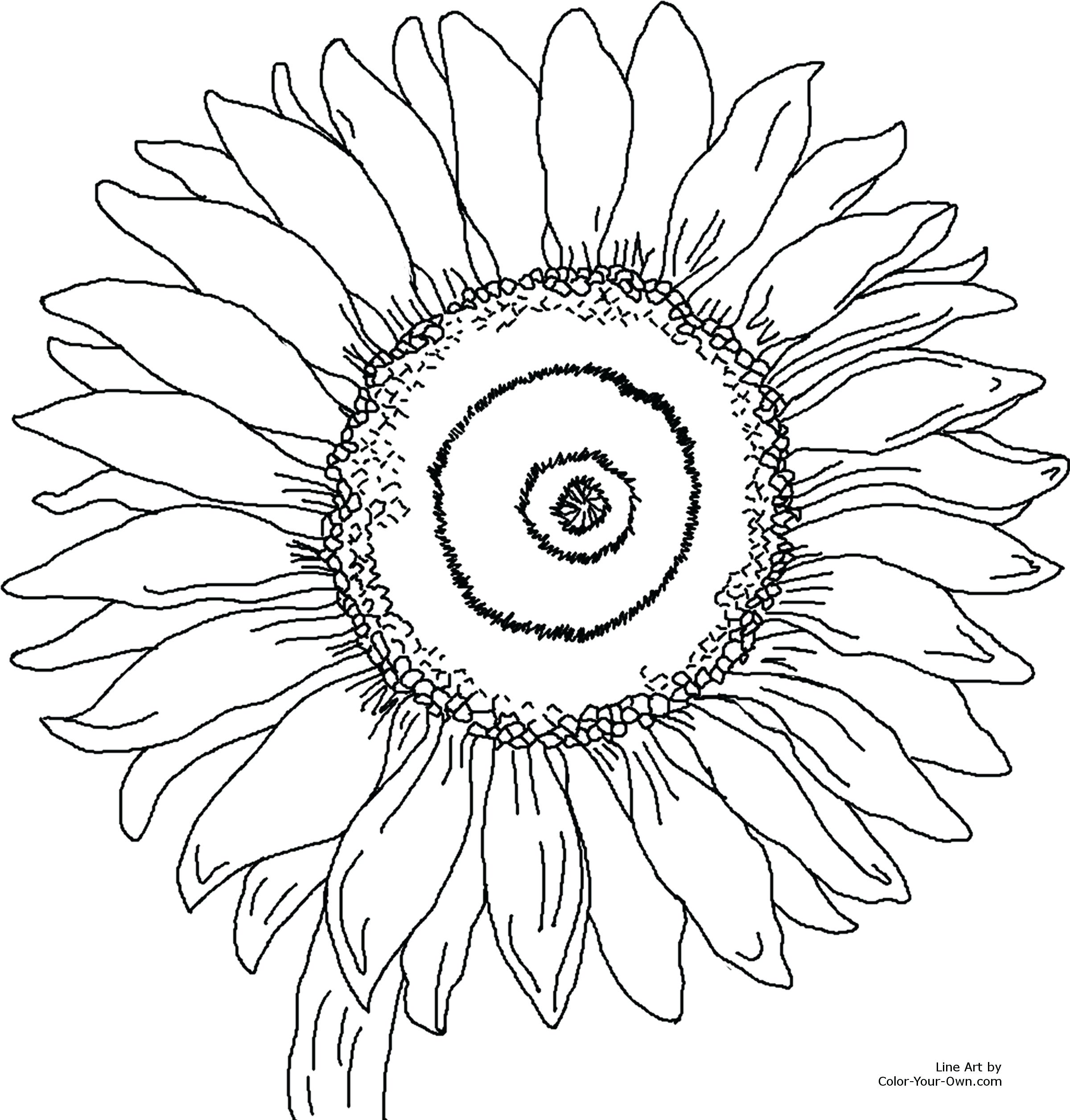 2400x2511 Coloring Van Gogh Sunflowers Coloring Page Printable Size Click